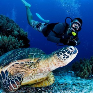 Tour du lịch Philippines - bohol-turtle