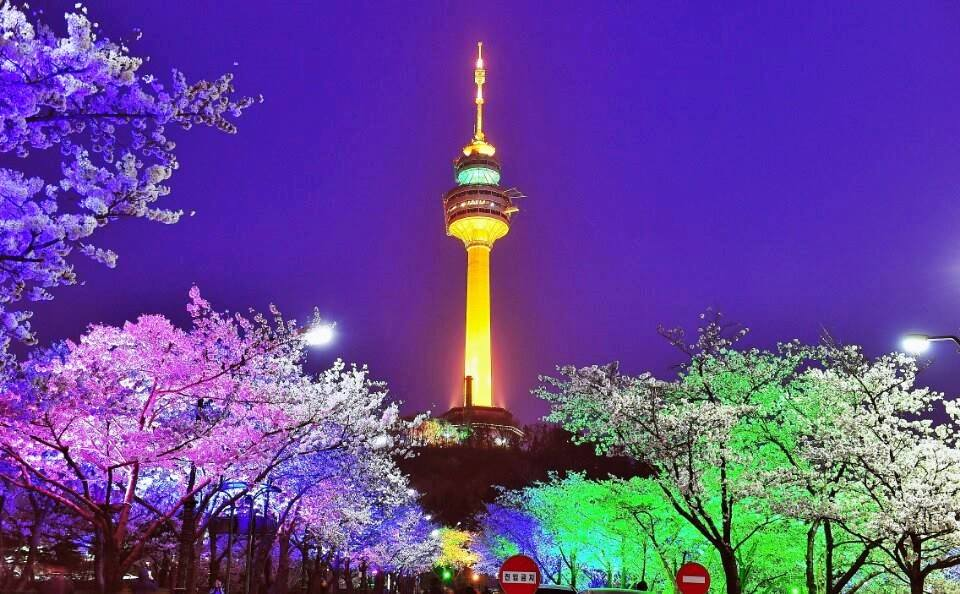 Cherry Blossom N Seoul Tower